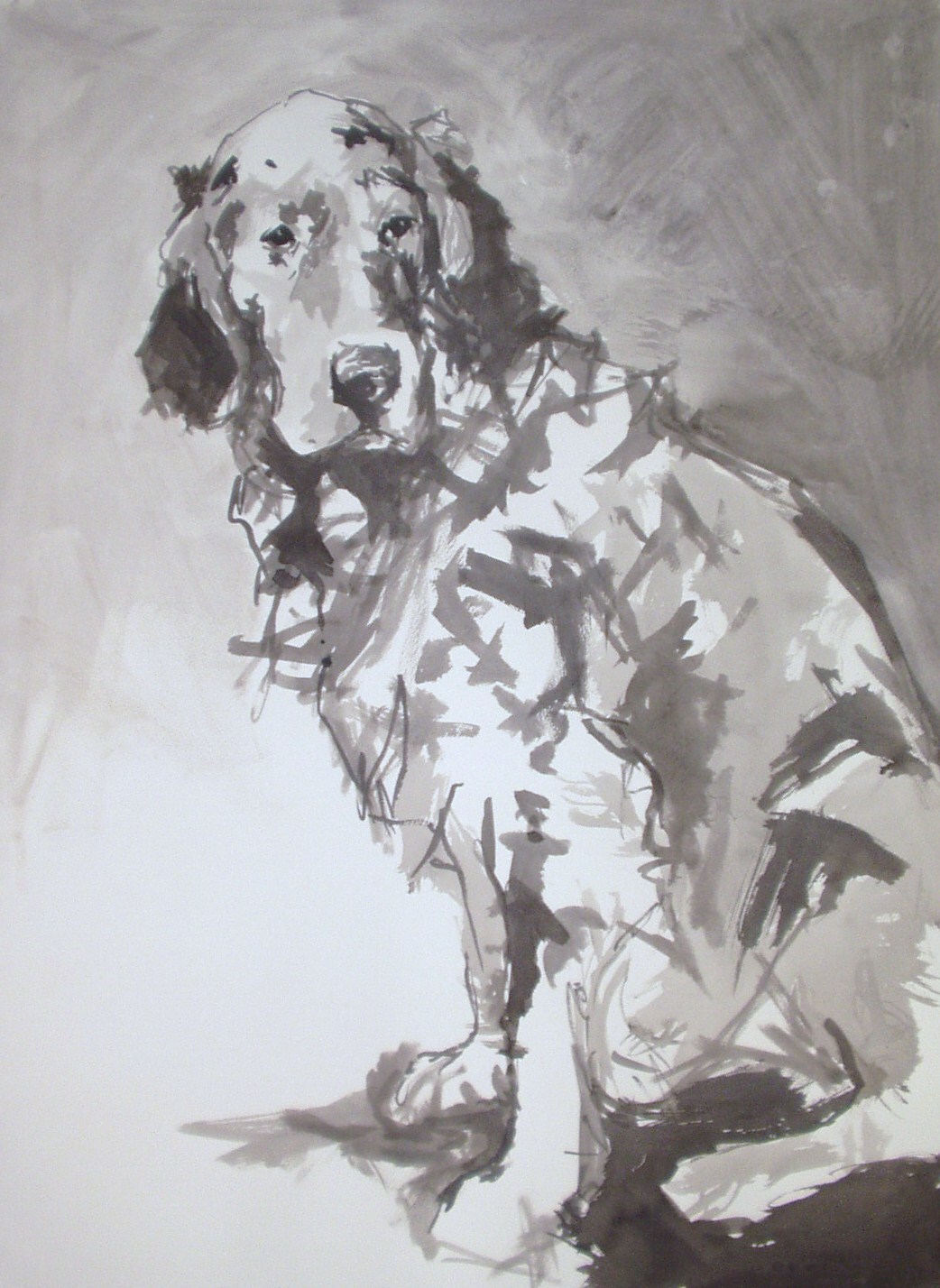 english-setter-black-ink-on-paper-30-inches-x-22-inches-approx.jpg